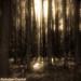 FOREST SPIRITS by radziobest meteostar.mozello.pl