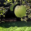 Una mela