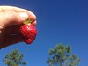 One Strawberry (Grown in Strawberry, AZ) to Rule Them All