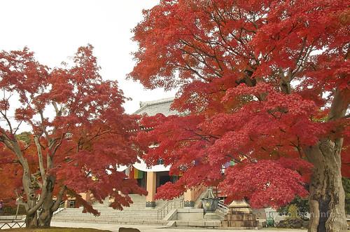 【写真】2014 紅葉 : 智積院/2020-09-07/IMGP7558