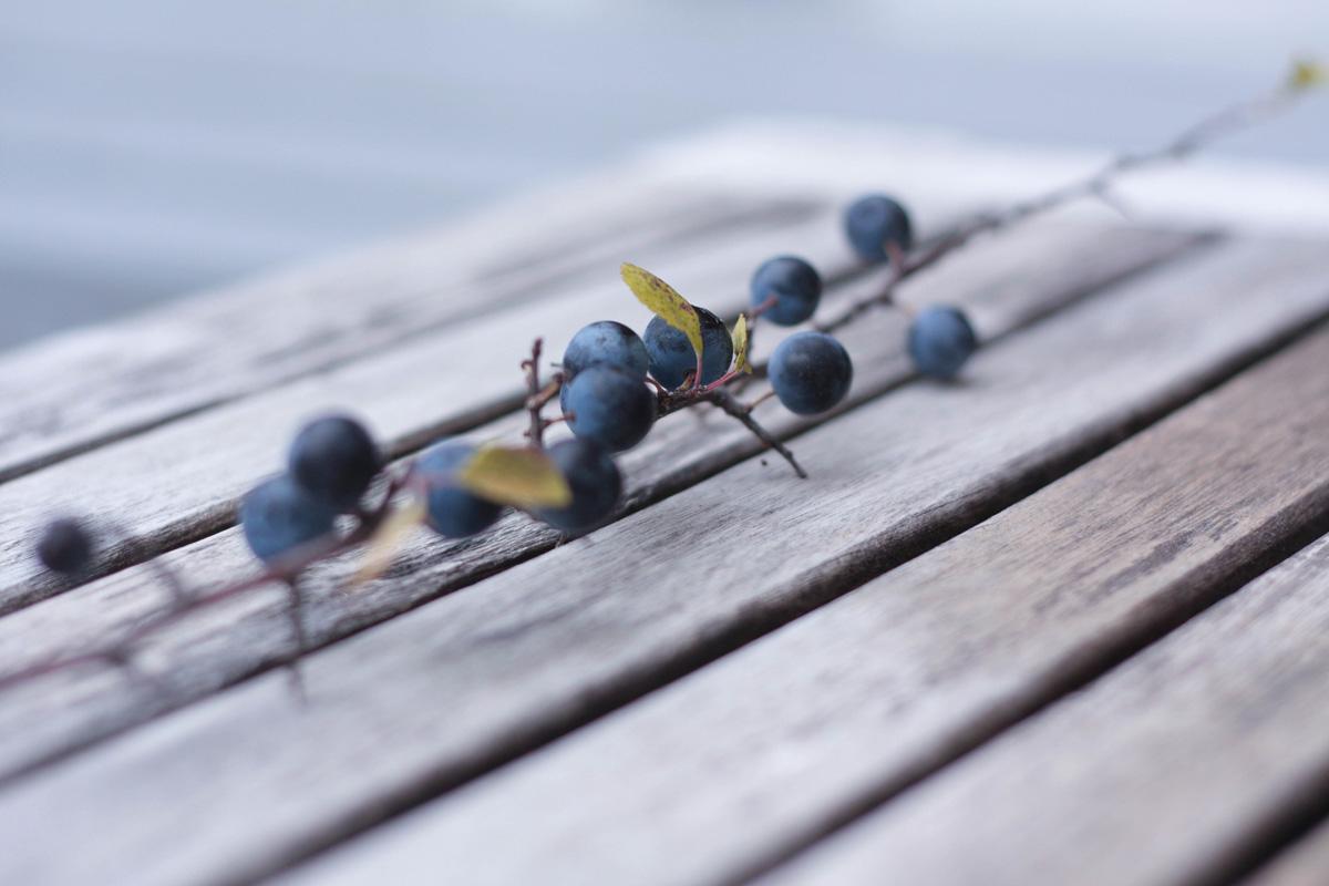 fruit-automne