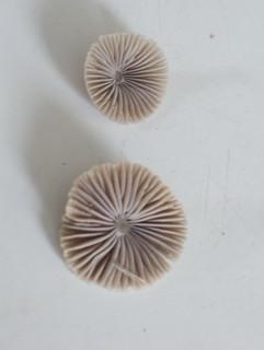 Mushrooms - YD00170
