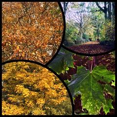 Colours of Autumn, Newmarket, Suffolk