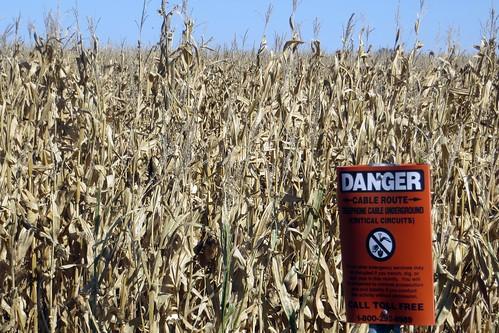 corn farm iowa
