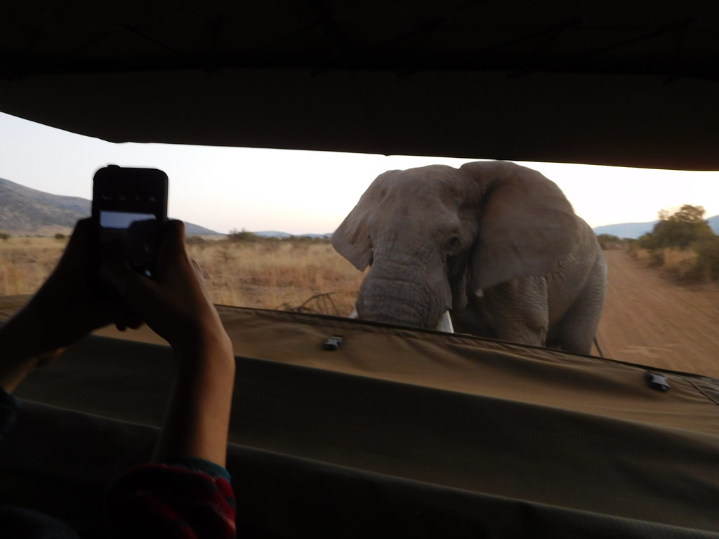 Members of Kettering Children's Choir are treated to an up-close view of an elephant during a visit to the Pilanesberg Game Reserve