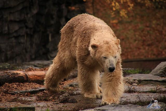Tierpark Berlin 07.11.2015  0114