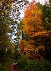 Wicklow Autumn