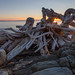 Driftwood, Reid State Park sunrise by Don Seymour