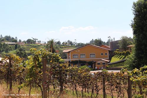Vinícola Góes - São Roque - SP