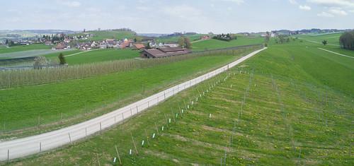 Südlich von Götighofen, Sulgen, April 2017