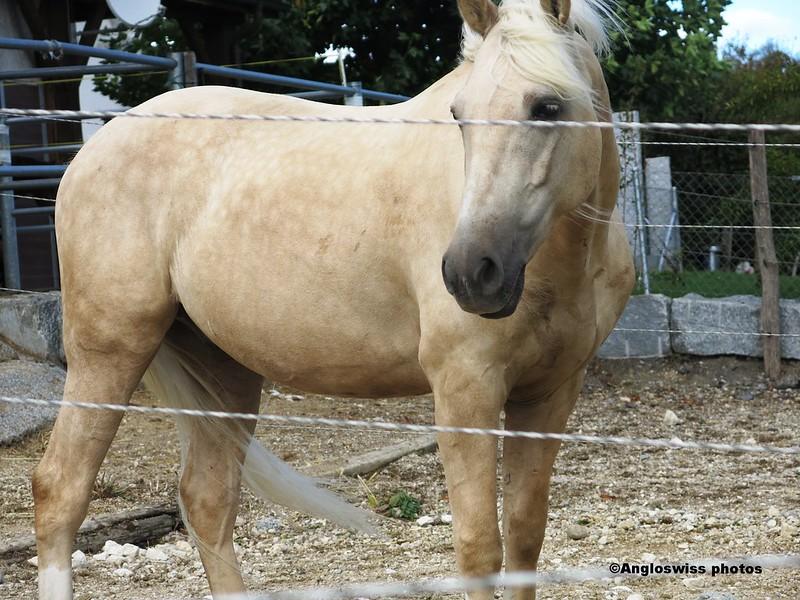 Horse, Feldbrunnen