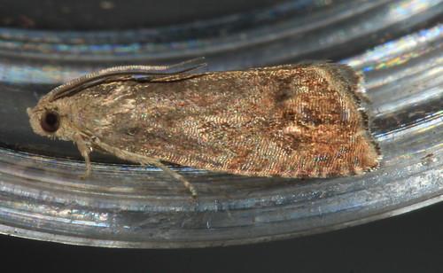 Micro 3563