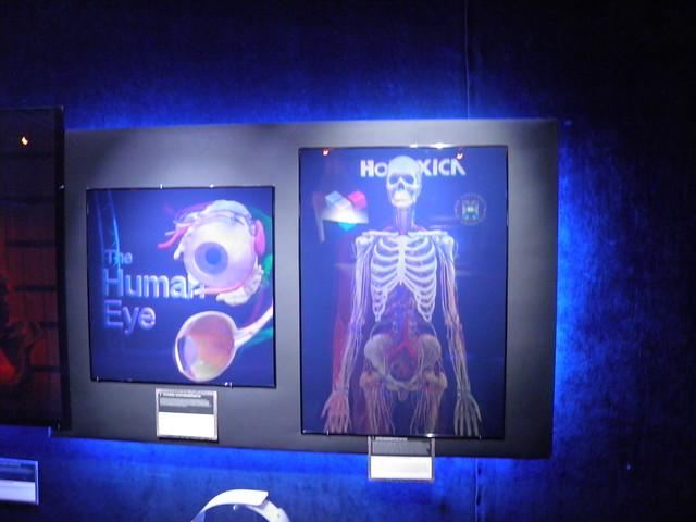 Анатомия женщины | Глаз человека