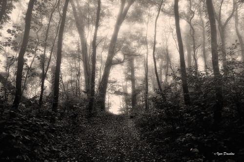 life morning autumn trees light bw mist nature monochrome up misty fog forest landscape mono blackwhite nikon outdoor path miracle walk live breathe majestic forward утро осень fairytail d90 чудо спешитежить
