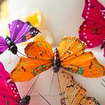 Бабочки осенних цветов
