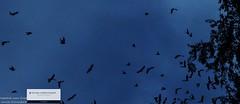 vogel-trek-zuid