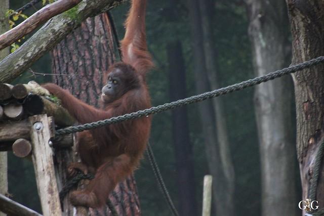 Besuch Zoo Rostock 17.10.201548
