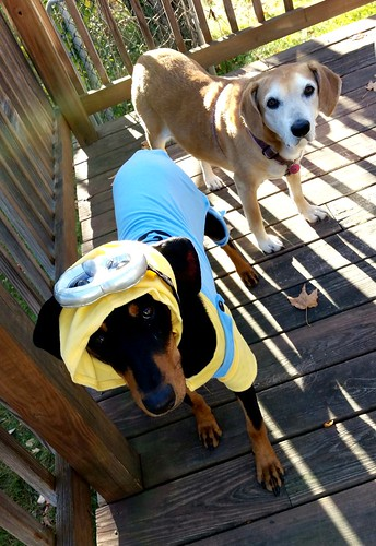 doberman minion puppy Lapdog Creations