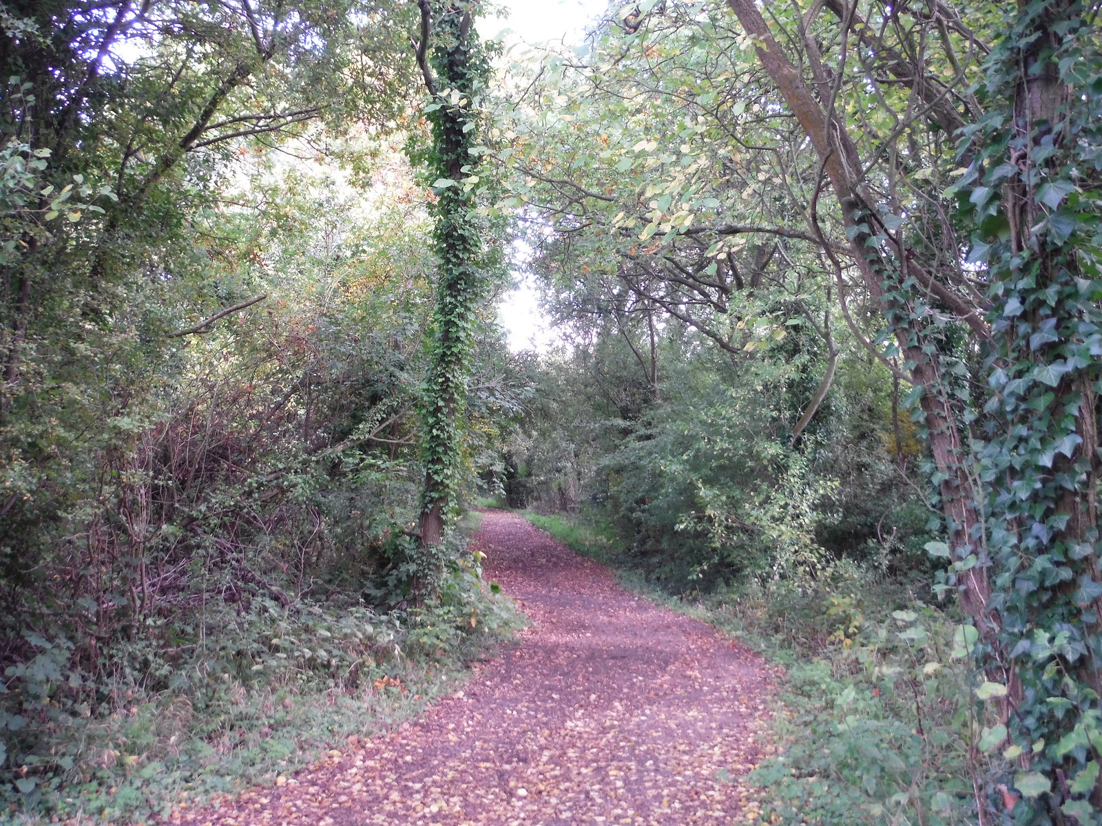 Path in Willow Park Nature Reserve SWC Walk 114 Laindon Circular