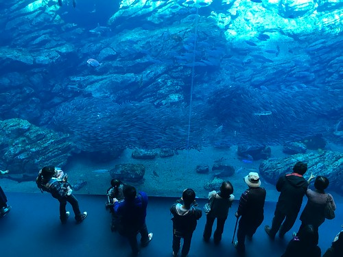 海の杜水族館