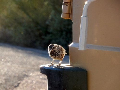 Lost Dutchman State Park - bird on bus