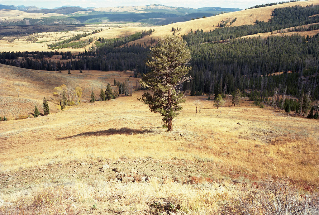 Yellowstone 30