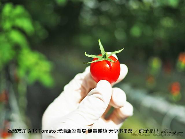 番茄方舟 ARK Tomato 玻璃溫室農場 無毒種植 天使串番茄 44