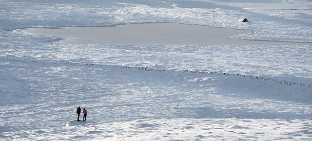 Frozen...., Nikon D810, Sigma 70-200mm F2.8 EX DG OS HSM