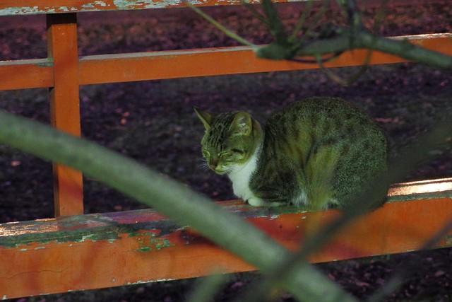 Today's Cat@2017-01-05
