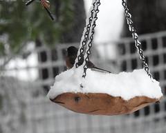 Snowbird 3 - Snowpocalypse 2017_19