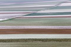 more fields inwinter