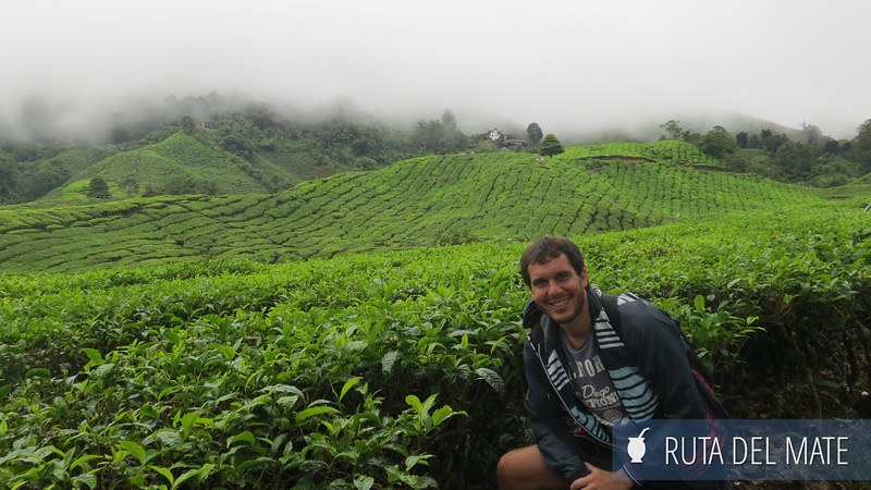 Cameron Highlands Malasia (3)
