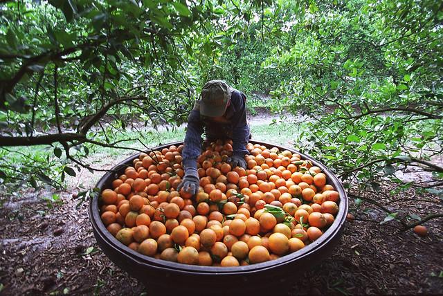 orange00 slavery proj rnv