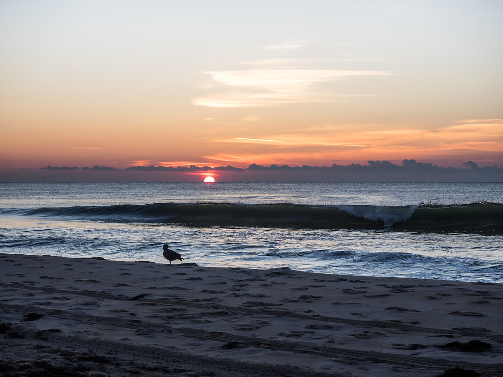 Long beach island ocean county new jersey around guides for Lbi surf fishing report
