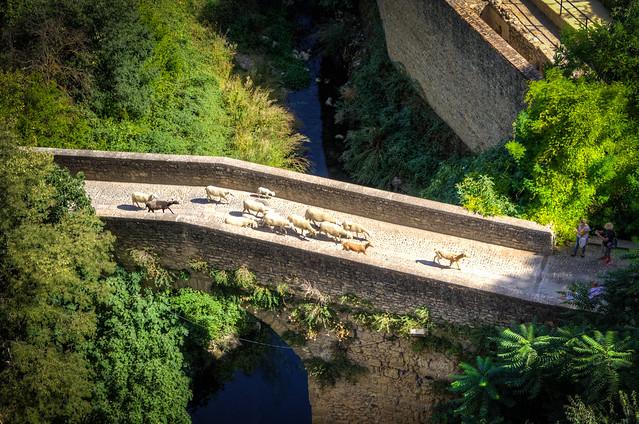 Rush Hour on the Roman Bridge
