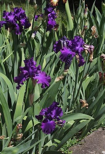 Iris Master Touch (52)