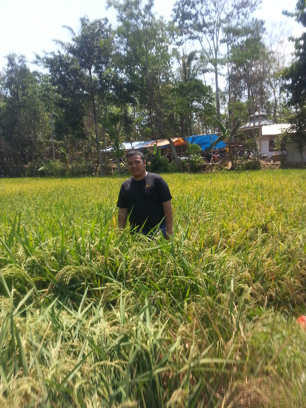 Me surrounded by Rice Field
