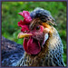 P1000141-1 - Grand Old Bird! by dangle earrings