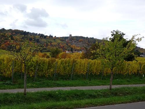 Wachenheim an der Weinstraße