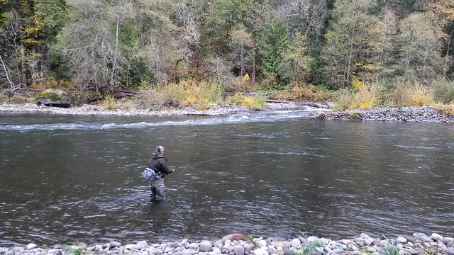 middle fork of the willamette fly fishing