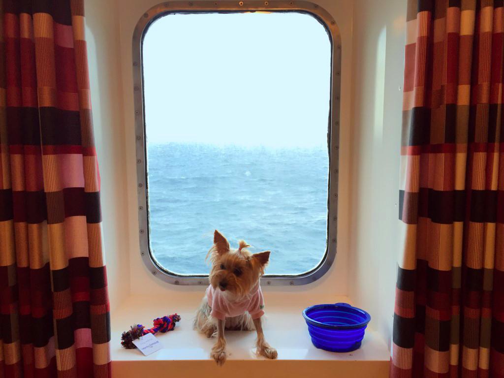 Viajar con mascotas a Reino Unido: Viajar con mascotas a Reino Unido viajar con mascotas a reino unido - 23031217424 0aa5131d9c b - Viajar con mascotas a Reino Unido desde España
