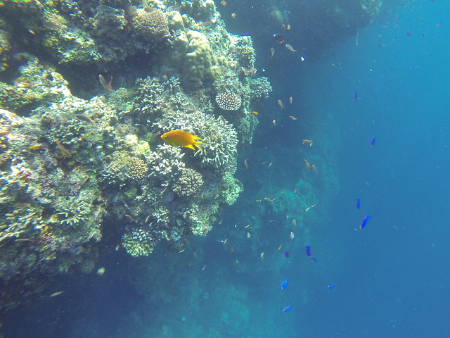 でもこの絶壁がお魚ポイント! 色とりどり。