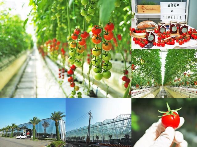番茄方舟 ARK Tomato 玻璃溫室農場 無毒種植 天使串番茄 200
