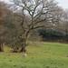 Sussex Weald by Adam Swaine
