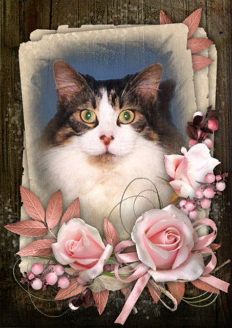 Mitzi Sitting Up Photo And Pink Flowers