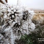 Espectacular helada en La Laguna. La Guardia (Toledo) 8-1-2017