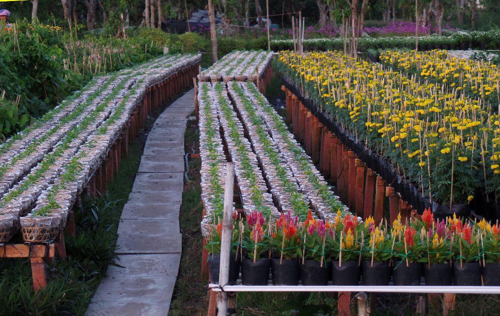 Các lối đi vườn các giàn trồng hoa đã được bê tông hóa