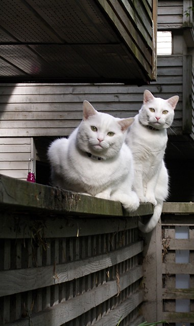 Neighbour Cats