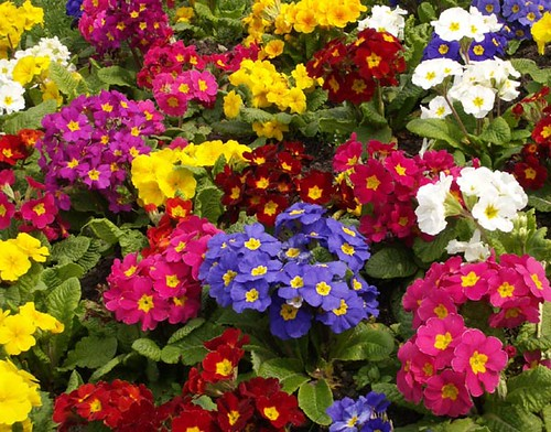In an english country garden flickr photo sharing for Tipos de plantas para jardin