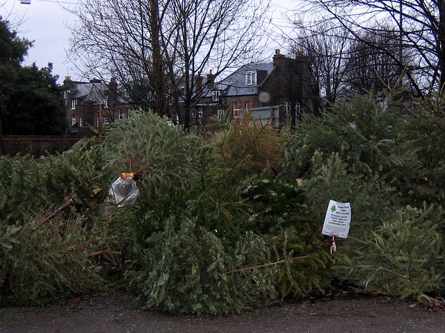 where christmas trees go to die